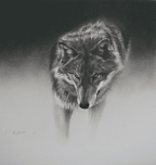 Gray Wolf  - Print by Cole Johnson